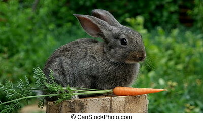 Rabbit Beautiful animal of nature - Baby rabbit bunny on...