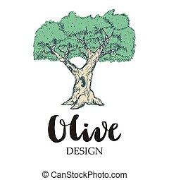 oliva, albero, illustrazione
