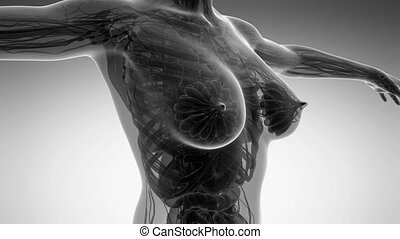 loop science anatomy of human body in x-ray with all organs