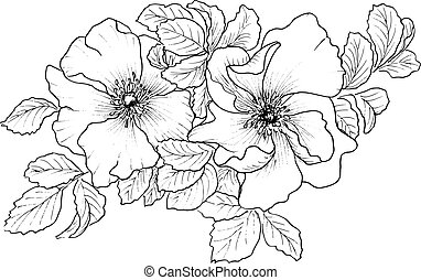 Briar. Wild rose isolated on white. Hand drawn illustration....