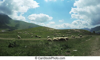 Flock of sheep in mountains - Against backdrop of mountains...