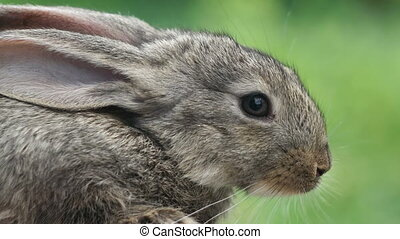 Rabbit. Beautiful animal of wild nature - Portrait of...
