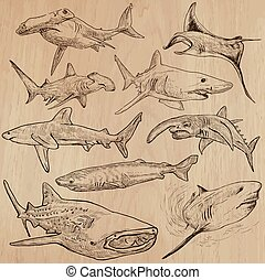 Sharks - An hand drawn vector pack - Animals - SHARKS,...