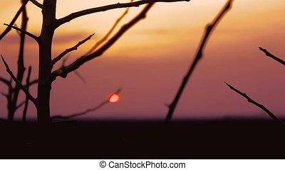 sunset branch nature - tree branch apricot silhouette on...