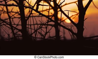 sunset branch nature - tree branch silhouette apricot on...
