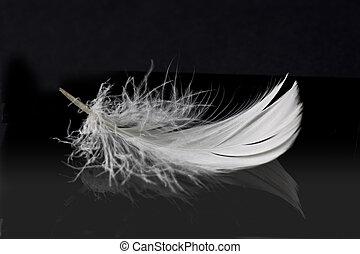 blanco, pluma, sólido, negro