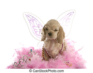 spoiled puppy - american cocker spaniel puppy dressed up as...