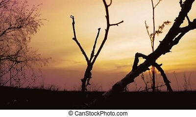 sunset branch nature - birch sunset silhouette tree on...