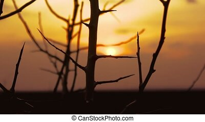 sunset branch nature - tree apricot branch silhouette on...