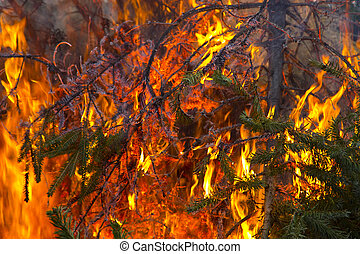Open flame on Fir Tree Branch
