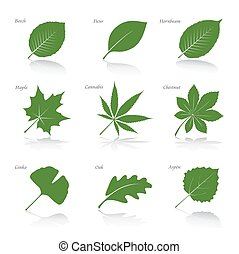 Collection of Green Leafs Vector Illustration