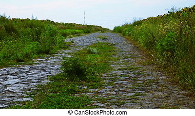 Old road overgrown with grass - Old road grassy field...