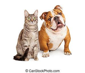 hund, vänskapsmatch, tillsammans, katt