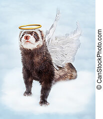Pet Ferret Angel in Clouds - Pet ferret in sky clouds with...