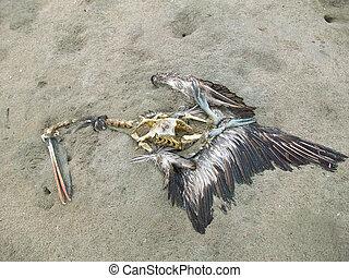 A Dead pelican on a beach in South America, Peru