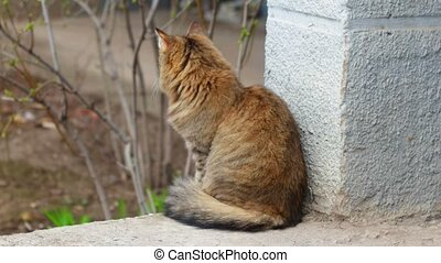 Fluffy Cat sit outdoors. Stray cat looking at camera. Red...