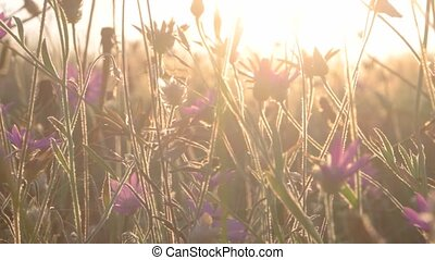 Wild flowers backlit. Shot of violet wild flowers fly with...