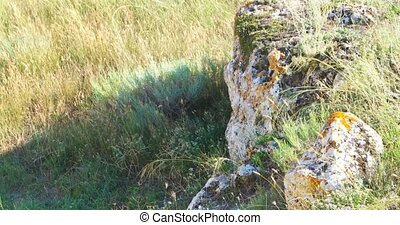 Rock covered with lichen and grass in the wind about