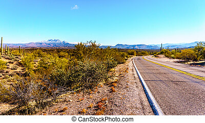N. Bush Hwy & Four Peaks Wilderness - North Bush Hwy and the...