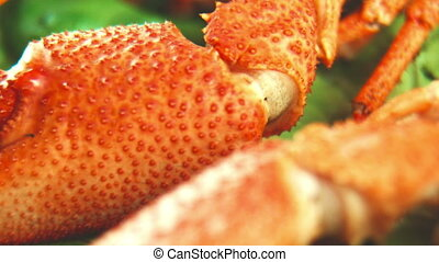 Close shot of claw of crayfish - Close panoramic shot of...