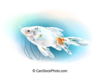 Goldfish in the sea.  Aquarium fish. Realistic  illustration