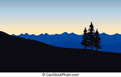 Silhouette of spruce in desert