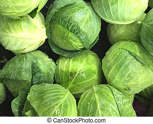Fresh picked lettuce background - Fresh picked heads of...