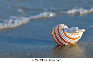 Shell on tropical beach