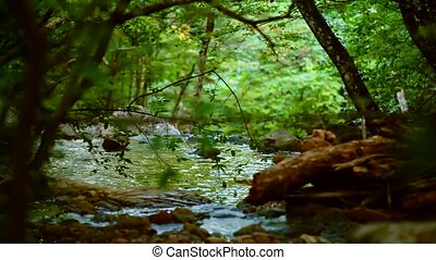 Calm River Flowing Deep In The Forest - Picturesque...