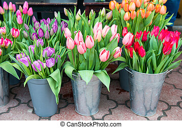 Tulips in the buckets - Beautiful spring flowers tulips in...