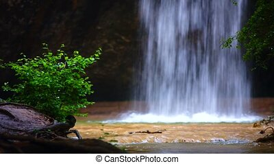 Small Waterfall Falling Down In Wild Forest - Small...
