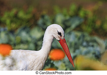 Stork portrait of flowers