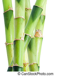 Bamboo - Green bamboo isolated on white