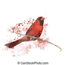 Digital Painting of Male Northern Cardinal Perching on a...