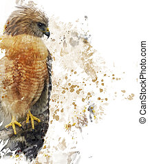 Red Shouldered Hawk Watercolor - Digital Painting Of Red...