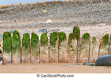 Breakwater - Old wooden breakwater with green seaweed on the...
