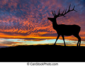 Silhouette of Red Deer Elk at Sunset - Silhouette of red...