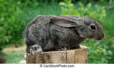Lovely Rabbit Beautiful animal of wild nature - Portrait of...