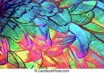 Coloful Feather Background - Feather background made up of...