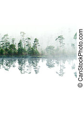 Morning in taiga forest. Fog on the surface of water....