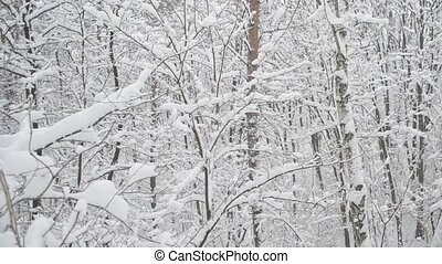 Snow falling in leafless snowy deciduous forest in winter -...