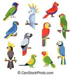 Cartoon parrots set and parrots wild animal birds vector...