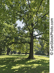 Stadt park in Graz, Austria - Stadt park landscape in Graz,...
