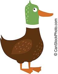 caricatura, pato, granja, animal, carácter, vector., ,