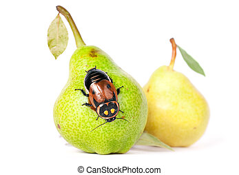 juicy pears with beautiful cockroach
