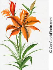 Hot red lily flower - Beautiful lily flower watercolor...