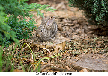 Rabbit is Beautiful Animal of Nature - Cute easter rabbit...