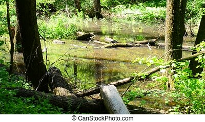 Beautiful small pond in a forest in spring on a sunny day