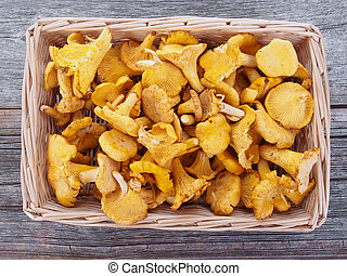 Chanterelle in a basket
