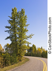 Road curves around tall trees - A country road curves around...